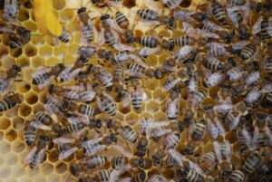 An Introduction To Beekeeping with Imogen Hallam of Artemis Bees