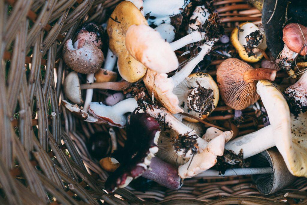 Mushroom Workshop
